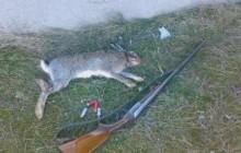 دستگیری یک شکارچی خرگوش در تکاب