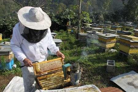 خوی رتبه نخست تولید عسل در کشور