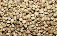 کشف300 کیلوگرم بذر شاهدانه قاچاق در شهرستان سربیشه