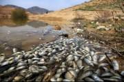 مرگ هزاران ماهی در یک بند خاکی خراسان شمالی در هاله ای از ابهام