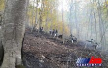 مدیر کل منابع طبیعی گلستان: ۱۸۰ هکتار از جنگلهای گلستان در آتش سوخت