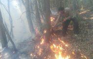 آتش سوزی در جنگل های کجور نوشهر