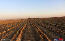 آغاز کشت غلات پاییزه در دهلران