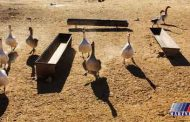 خشکسالی و مهاجرت ساکنان سیستان+عکس