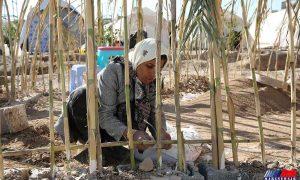 ساخت-کپر-در-مناطق-زلزله-زده-سرپلذهاب-10