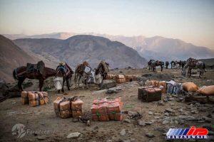 قاچاقچیان در منطقه مرزی عراق با ایران از اسب و قاطر برای جابجایی کالا استفاده می کنند.