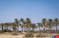راه اندازی ۳ کانون اصلی آموزش کشاورزی در روستاهای آبادان