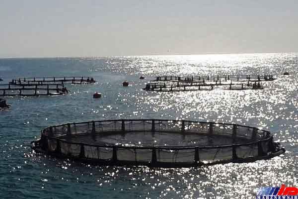 سواحل مکران مستعد پرورش سالانه ۳۰۰ هزار تن ماهی در قفس