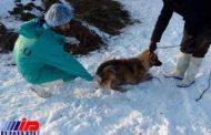 طی 10 ماهه سالجاری بالغ بر 1000قلاده سگ علیه بیماری هاری واکسیناسیون شدند