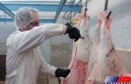 نظارت بر استحصال بیش از 34 تن گوشت قرمز توسط شبکه دامپزشکی شهرستان پلدشت
