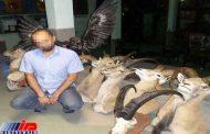 کشف شکار و ادوات غیرمجاز و دستگیری یک شکارچی در درگز