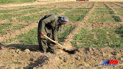 باید از توانمندی های علمی در کشاورزی کردستان استفاده شود