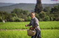 برطرف شدن مشکلات اقتصادی کشور با همت کارگران و کشاورزان