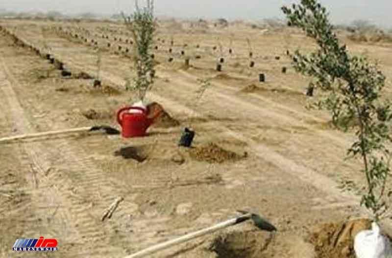 بیشترین میزان نهال کاری در استان ایلام ثبت شد