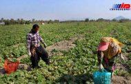 مهمترین مشکل بخش کشاورزی خراسانجنوبی نبود صنایع تکمیلی است