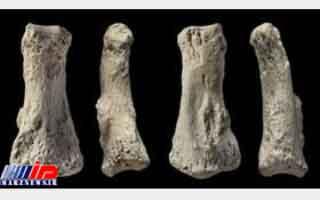 کشف فسیل 85 هزار ساله انسان در عربستان سعودی