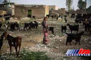 زندگی زیر تیغ محرومیت در استان بوشهر (+عکس)