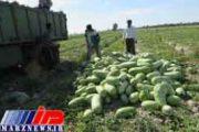 صادرات هزاران مترمکعب آب هندوانه ای از سیستان و بلوچستان به کشورهای عربی