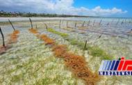 استخراج کاراگینان و بتا کاروتن از ماکروجلبک ها