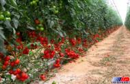 کشاورزی بوشهر آغاز نوین سازی