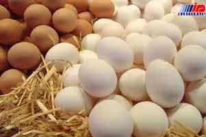 واردات تخم مرغ از سرگرفته شد
