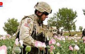 پیوند تروریسم و مواد مخدر در افغانستان زیرسایه مستشاران غربی