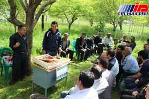 خلخال قطب تولید عسل استان اردبیل است