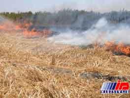 آتش سوزی گندمزاری در بندرترکمن مهار شد