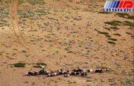 خطر بیابانی شدن 300 هزار هکتار از اراضی گلستان