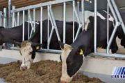 برابری قیمت شیر با آب معدنی در خراسان شمالی