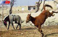 اسب هار نوجوانی را کشت