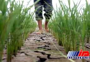کل مازندران درگیر خشکسالی است
