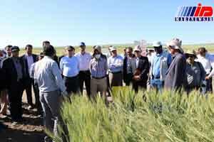 ایران از واردات گندم بی نیاز شد