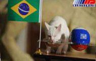 آشیل پیروزی برزیل بر کاستاریکا را پیشگویی کرد