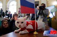 شاهین تا آشیل؛ حیوانات پیشگوی جام های جهانی