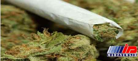 کارزار رسانه ای مصرف ماده مخدر گل را در مازندران کاهش داد