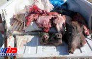 چهار شکارچی فروشنده گوشت خوک در آمل دستگیر شدند