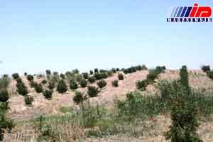 اشتغال پایدار مرزنشینان قصرشیرین با توسعه باغداری مدرن