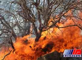 آتش سوزی جنگل های قرخود مانه و سملقان مهار شد