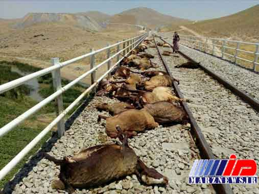 برخورد قطار کرمانشاه مشهد با گله گوسفندان