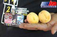 جشنواره بین المللی فیلم ارمنستان باحضور ایران گشایش یافت