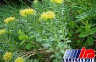 واردات ۱۵۰میلیون دلاری گیاهان دارویی به کشور