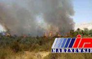 ادامه آتشسوزی هورالعظیم در عراق