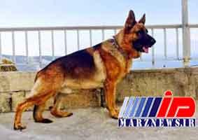 فروش سگ ۵۰۰ میلیونی در مشهد+عکس