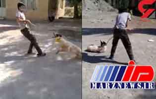 محکومیت دو مجرم حیوان آزار به خدمت رایگان