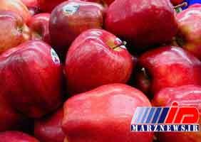 صادرات سیب ۱۰ برابر شد