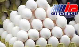 انتقاد از تصمیم دولت برای واردات تخم مرغ