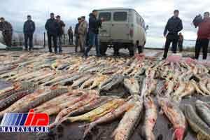 مروارید دریای خزر در دستان قاچاقچیان