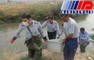 کشف جسد مردی در سد داریان کردستان