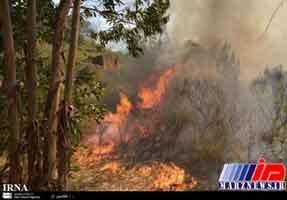 آتش سوزی در جنگل های لپوی بهشهر مهار شد